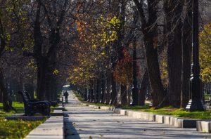 bomen-park